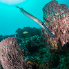 PBC reef