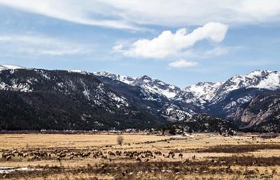 A Heard of Elk
