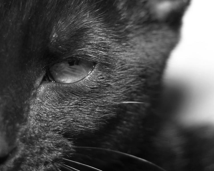 Bad Mr. Kitty