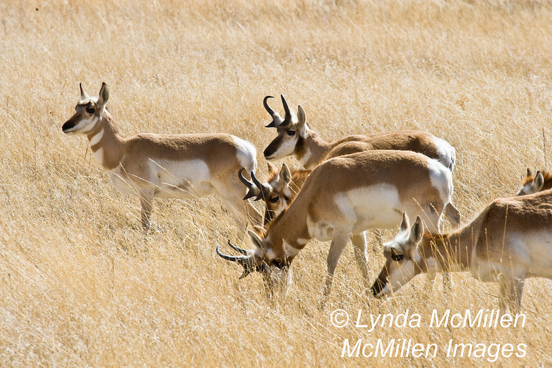 Where the deer and the antelope play...(sing along now!)