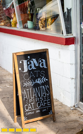 Hadyn Hilton owns and operates Java Cat Cafe in Grant Park.  The innovative coffee shop, provides not only a spot for coffee lovers and mobile working spots, the venue also offers a sectioned off area where cats mingle with paying guests, in the hopes of socialization and eventual addoption.  Hilton is expanding to Marietta where they will also offer beer and wine.  (Jenni Girtman / Atlanta Event Photography)