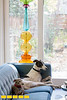 Designer Caryn Grossman and photographer Chris Buxbaum have adapted their small home to highlight their lifestyle.  They love entertaining, cooking, books and their two rescued greyhounds.