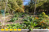 Oakhurst Garden is a community garden in Decatur that is made up of community plots, a greenhouse, a mini-farm, herb garden, chickens and pocket ecosystems.