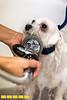 140516LIajc071314dogdays-DogmaLRO-0008