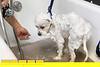 140516LIajc071314dogdays-DogmaLRO-0011