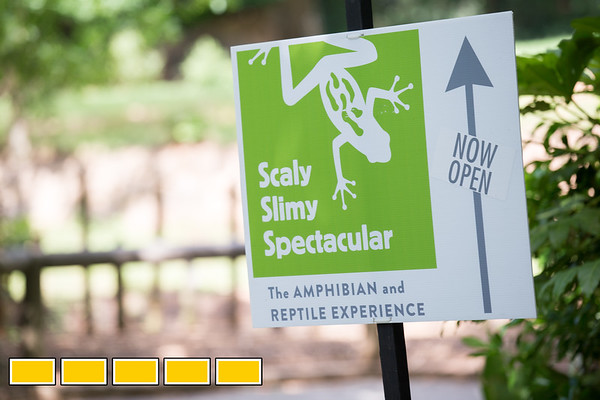 Zoo Atlanta is located in Grant Park and opened it's doors in 1889.  In April of this year they opened a new amphibian and reptile exhibit called Scaly Slimy Spectacular and in May they welcomed Big Al the 122 year old Aldabra Tortoise.