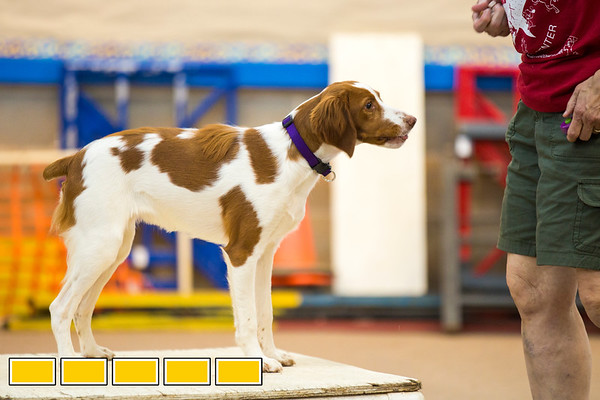 Sirius Dog Agility Training Facility combines outdoor exercise and training as dogs and owners run through an obstacle courses filled with hurdles, tunnels and ramps.