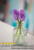 150115LIajc030115_IN_flowersLRO-0001