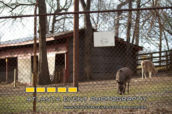 150122LIajc030115_IN_goatfarmLRO-0054