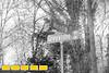 170112LIajc030517_IN_CollierHills-GreystoneLRO-1