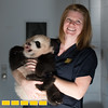 Zookeeper Katie Gatlin Inroduces us to the pandas she works with at Zoo Atlanta.