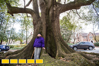 The Olmsted Linear Park system includes Oak Grove Park, where this white oak has stood since before the Revolutionary War. The park alliance, with help from Jennie Richardson, a historian and long-time resident, maintains the restoration and preservation of the series of linear parks designed by Frederick Law Olmstead between Ponce de Leon and South Ponce de Leon from Moreland to the 22 acre Deepdene Park.  (Jenni Girtman / Atlanta Event Photography)