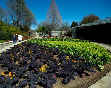 The Atlanta Botanical Garden has an outdoor kitchen near the edible garden, where kale and chard grows along with a wall of herbs.  (Jenni Girtman / Atlanta Event Photography)