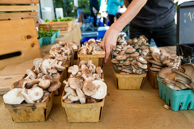 Organic gourmet and medicinal mushrooms are for sale at Sparta Mushrooms' booth at the Morningside Farmers' Market.  The market is open every Saturday, year round, at 1393 N. Highland Ave. where organic meats, breads, local food, pop-up breakfast, coffee and fresh fruits and vegetables are available weekly.  (Jenni Girtman / Atlanta Event Photography)
