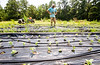 King of Crops is a working farm still in its beginning stages.  Stephen Dobek manages the farm in Winston, GA where ingredients for King of Pops will be sourced.  Some crops, like basil, growing here, and blackberries, already are part of the pops production.  (Jenni Girtman / Atlanta Event Photography)