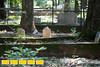 160718LIajc091116_IN_EastAtlanta-CemeteryLRO-6