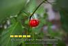 140712LIajc090714tourofhomes-CandlerParkLRO-0005
