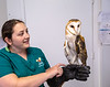 AWARE, the Atlanta Wild Animal Rescue Effort, in Lithonia rehabilitates and houses wildlife, many who come from urban neighborhoods.  Windy Sue, a barn owl, with Marielle Kromis, a wildlife care supervisor, is one of the oldest residents at the refugee.  She was rescued from a resident who was afraid the bird would hurt her cat, and beat Windy Sue with a broom stick in 2010, wounding her wing permanently and killing her mate.  Windy Sue visits schools and is a permanent AWARE resident.  (Jenni Girtman / Atlanta Event Photography)