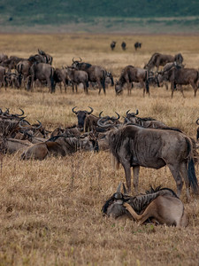 An Implausibility of Gnus