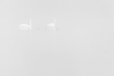 Morning family talks in the fog