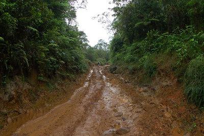 Hiking in the Sarapiqui