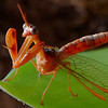 Actually a mantispid<br /> correction provided by Guillaume Dury