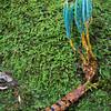 Ophiocordyceps jiangxiensis