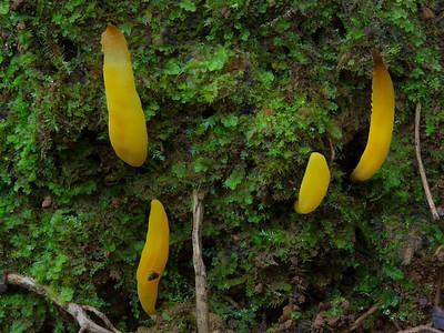 Lichen, Slime Mould and mycellium
