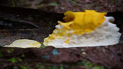 Slime Mould