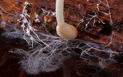 Mycelium photos