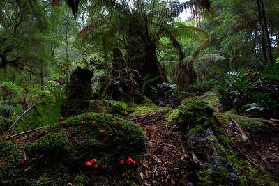 Plants - the creators