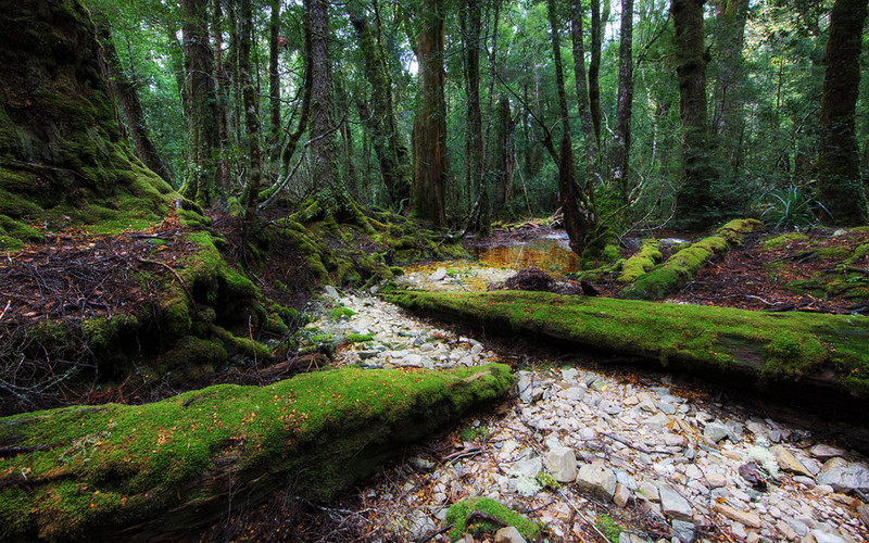 The Ballroom Forest, Cradle Mountain, Tasmania