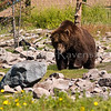 YELLOWSTONE GRIZZLY AND WOLF PRESERVE