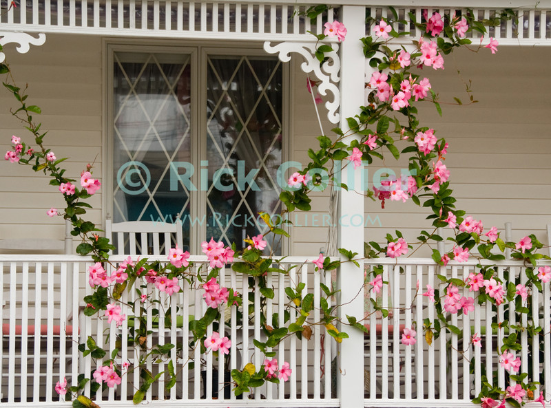 "Climatis vines adorn the railing and deck of a home at Ocean Grove, New Jersey, USA.<br /> <br /> <br /> USA ""New Jersey"" NJ ""Ocean Grove"" Ocean Grove sidewalk house home deck porch railing post flower flowers Climatis vine"