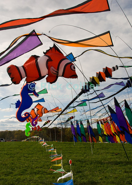 """Flags decorate the entrance to the annual balloon festival at Long Branch Farm, Winchester, Virginia, USA.  © RickCollier.com<br /> <br /> <br /> <br /> <br /> <br /> """"balloon festival""""; USA; Virginia; Winchester; """"Long Branch""""; """"Long Branch Farm""""; field; grass; flag; flags; wind; breeze;"""