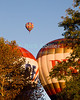 "Hot air balloons lift over the trees in early morning at the annual Winchester Balloon Festival.  Long Branch Farm, Winchester, Virginia, USA.  © RickCollier.com<br /> <br /> <br /> <br /> <br /> <br /> ""balloon festival""; USA; Virginia; Winchester; ""Long Branch""; ""Long Branch Farm""; tree; trees; dawn; morning; balloon; lift; ""balloon lift""; field; sunrise; fog; dog; fun; funny; shape; ""dog balloon"";"