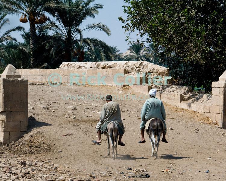 Saqqara, Cairo, Egypt -- Two local workmen take their rides (donkeys) home to lunch in the mid-afternoon. © Rick Collier / RickCollier.com.<br /> <br /> <br /> <br /> <br /> <br /> travel; vacation; tour; tourism; tourist; destination; Egypt; Cairo; Saqqara; local; sights; donkey; Egyptian; workman