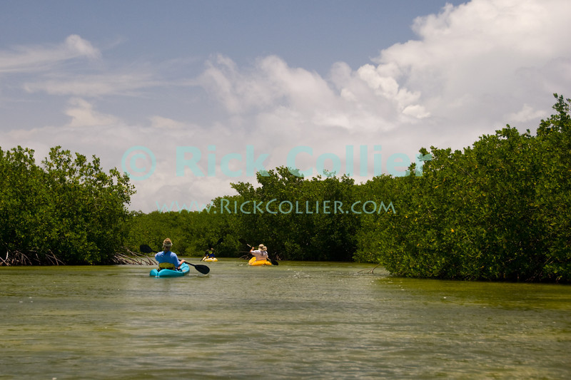 """Bonaire, Netherland Antilles -- The <a href=""""http://www.mangrovecenter.com/"""">Mangrove Information Center</a> offers guided, group kayak tours of the protected mangrove forests on Bonaire's windward side.   © Rick Collier     Bonaire; """"Netherlands Antilles""""; Caribbean; tropic; tropical; vacation; destination; mangrove; mangroves; """"Mangrove Information Center""""; kayak; """"kayak tour""""; """"mangrove forest""""; """"mangrove swamp""""; tour; kayaking; excursion;"""
