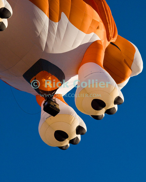 "A dog-shaped hot air balloon takes flight at the annual Winchester Balloon Festival.  Long Branch Farm, Winchester, Virginia, USA.  © RickCollier.com<br /> <br /> <br /> <br /> <br /> <br /> ""balloon festival""; USA; Virginia; Winchester; ""Long Branch""; ""Long Branch Farm""; field; tree; fence; fences; dawn; morning; dew; frost; balloon; lift; ""balloon lift""; dog; fun; funny; shape; ""dog balloon"";"