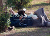 Time Off.  An elderly man dozes with his book, on the grounds of the Amman Citadel park.  Amman, Jordan.  © Rick Collier<br /> <br /> <br /> <br /> <br /> Jordan Amman arab elderly man resting rest read reading book cat nap recline sleep park