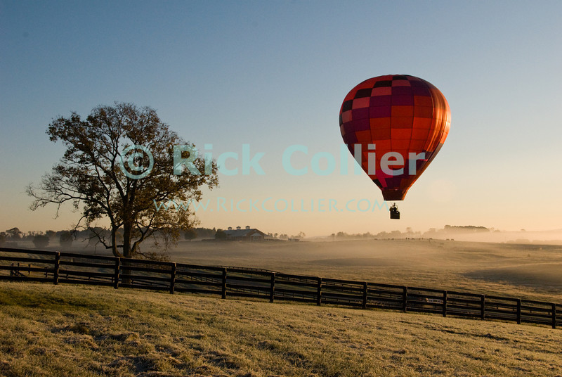 """Morning Flight"" -- A balloon lifts over fields and pastures in early morning at the annual Winchester Balloon Festival.  Long Branch Farm, Winchester, Virginia, USA.  © RickCollier.com<br /> <br /> <br /> <br /> <br /> <br /> ""balloon festival""; USA; Virginia; Winchester; ""Long Branch""; ""Long Branch Farm""; tree; trees; dawn; morning; balloon; lift; ""balloon lift""; field; sunrise; mist; fog; frost; fence; fences; field; pasture; tree; trees;"