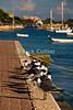 "Kralendijk, Bonaire, Netherland Antilles -- Seagulls line the waterfront breakwater and dock at the waterfront in the center of Kralendijk.   © Rick Collier<br /> <br /> <br /> <br /> <br /> Bonaire; ""Netherlands Antilles""; Caribbean; tropic; tropical; vacation; destination; Kralendijk; boat; ramp; waterfront; jetty; mooring; harbor; dock; sea; ocean; view; breakwater; bird; gull; gulls; seagull; seagulls; ""sea gull""; ""sea gulls"";"