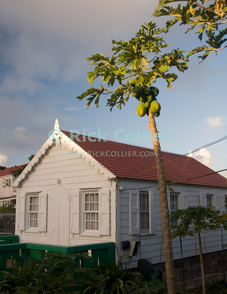 Saba - Fruit trees overhang many of the traditional European-style homes on the island.  © Rick Collier