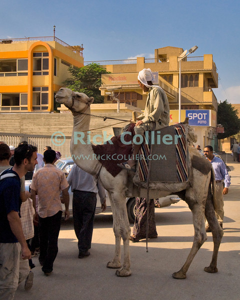 Giza, Cairo, Egypt -- A camel rider watches crowds pass on a Giza street. © Rick Collier / RickCollier.com<br /> <br /> <br /> <br /> <br /> <br /> travel; vacation; destination; Egypt; Cairo; Giza; camel; street; sidewalk;