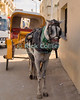 "Giza, Cairo, Egypt -- A horse and carriage taxi await their fare outside the pyramids complex at Giza. © Rick Collier / RickCollier.com<br /> <br /> <br /> <br /> <br /> <br /> travel; vacation; destination; Egypt; Cairo; Giza; pyramids; pyramid; ""Pyramids at Giza""; tourist; tourism; carriage; horse; taxi; ""horse-drawn carriage"""