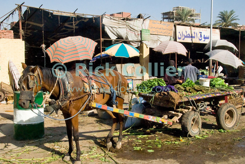 Cairo, Egypt -- Locals shop for food at a bazaar on the outskirts of Cairo. © Rick Collier / RickCollier.com.<br /> <br /> <br /> <br /> <br /> <br /> travel; vacation; tour; tourism; tourist; destination; Egypt; Cairo; market; bazaar; shop; groceries; grocery; food; foodstuffs; tent; stall; stalls; umbrella; cage; basket; fruits; fruit; vegetables; livestock; meat; drink; tea;