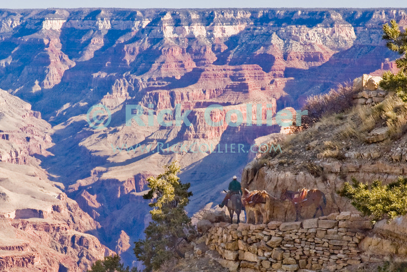 """The Grand Canyon, Arizona, USA. A mule train starts the long trip from """"Grand Canyon Village"""" to the Colorado River at the bottom of the canyon.  © Rick Collier<br /> <br /> <br /> <br /> <br /> <br /> <br /> <br /> US USA Arizona Grand Canyon Colorado River sun shadow day daylight cliff overlook river bed riverbed valley"""