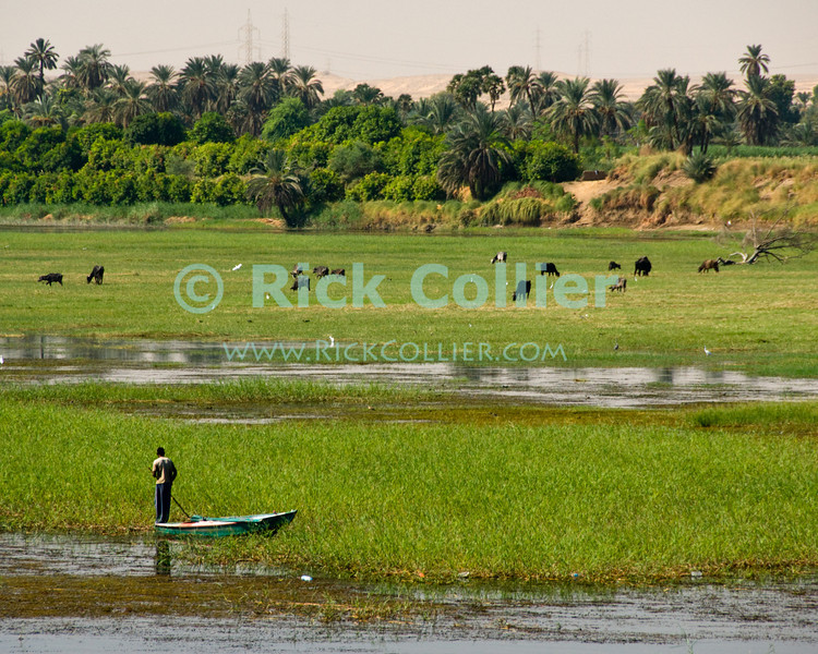 "Nile River, Egypt -- A fishing boat works their nets in the Nile River.  Each boat will string a net, then the boatmen will beat the water with planks or oars to drive fish into the nets (below Esna, Egypt). © Rick Collier / RickCollier.com.<br /> <br /> <br /> <br /> travel; vacation; tour; tourism; tourist; destination; Egypt; Nile; ""Nile River""; boat; fishing; fisherman;"