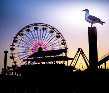 Seagul and Santa Monica Pier
