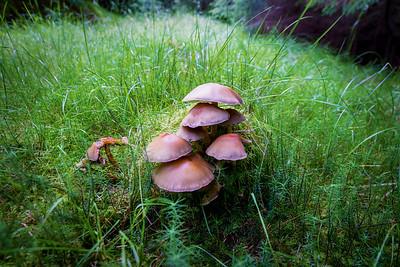 Mushrooms in Glencoe, Scotland